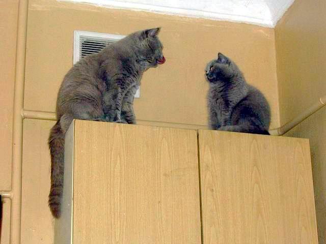 Кошки на полке