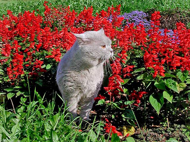 Артур  в цветах
