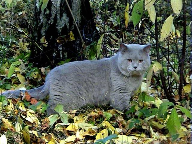 Артур в лесу