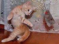 Котенок Бархат
