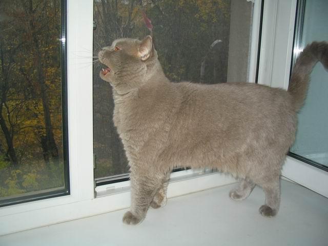 поющий кот Артур