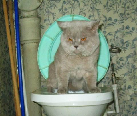 Artur_tualet