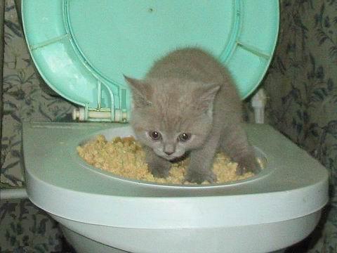 cat_tualet