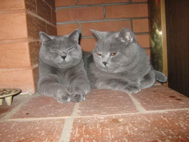 Сеня и Соня - дети Артура, 2 года