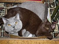 Кеника и Ватсон - дети Артура
